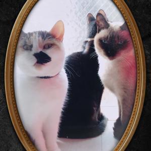 ★ハロウィンな猫★セトゥス♪♪