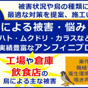 【動画あり】茨城県内3件のスズメバチ駆除 施工事例を紹介します