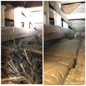 天井裏に大量のムクドリの巣とハクビシンのフンが・・・