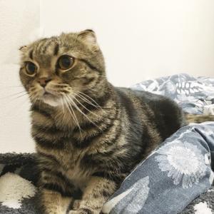 猫ヘンタイさん。