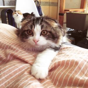 朝の猫たち☆