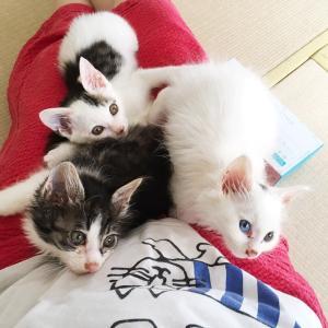 お仕事と保護猫と我が家猫☆
