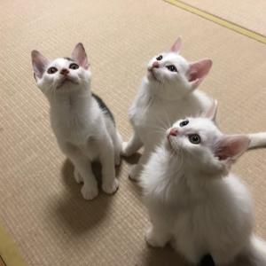 畳の上のプリンス☆