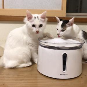 【保護猫】新しい水飲み器