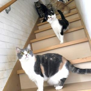 日曜日の猫たちへ☆とリバーくんの今。
