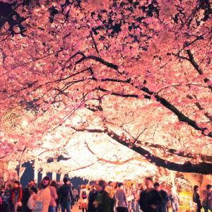 夜の舞鶴公園に行ってきた。