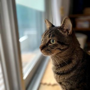 家猫計画(ハンター)