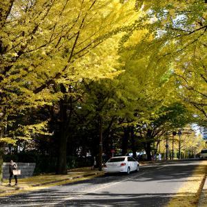 街路樹で最も多いのは・・・