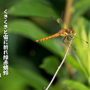 十月の俳句~くきくきと宙に折れ線赤蜻蛉