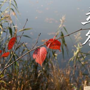 二十四節気「立冬」~暦の上で冬が始まる日