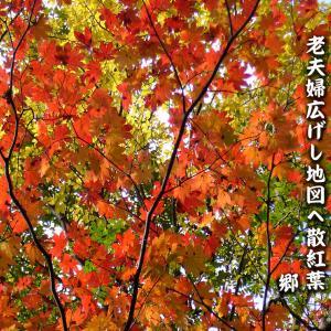 十一月の俳句~老夫婦広げし地図へ散紅葉