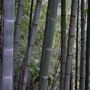 二月の俳句~料峭やぶつかり合へる竹のこゑ