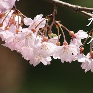 二十四節気「春分(しゅんぶん)」~昼と夜の長さがだいたい等しくなる頃