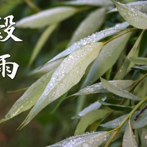 二十四節気「穀雨(こくう)」~ 穀物を潤す春の雨の降る頃