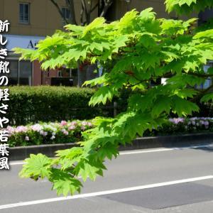五月の俳句~新しき靴の軽さや若葉風