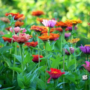 九月の俳句~庭の花抱きて後の彼岸かな