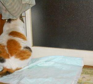 猫に小判を与えたら・・・。          埋蔵金:伍拾参両