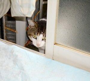猫に小判を与えたら・・・。          埋蔵金:伍拾四両