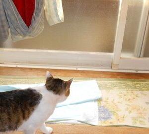 猫に小判を与えたら・・・。          埋蔵金:伍拾六両