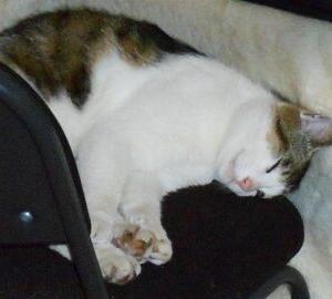 猫に小判を与えたら・・・。          埋蔵金:伍拾九両