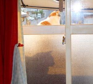 猫に小判を与えたら・・・。          埋蔵金:六拾壱両