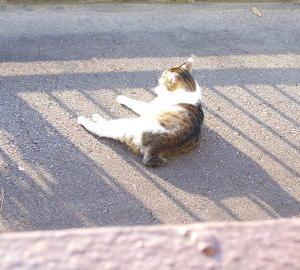 猫に小判を与えたら・・・。          埋蔵金:六拾弐両