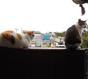 猫に小判を与えたら。  埋蔵金:九拾七両  黙ぁらす為の椀の水。