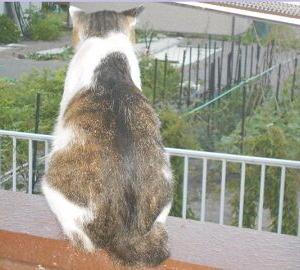 猫に小判を与えたら。  埋蔵金:九拾八両  見てぇみりゃぁソレぇかぁいっ!