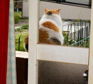 猫に小判を与えたら。  埋蔵金:九拾九両  怒ぉらす奴ぅっ。