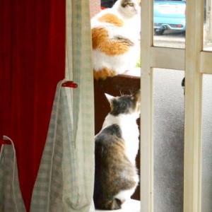 猫に小判を与えたら。 埋蔵金:百弐拾六両  雷ぃダメなんですぅわぁ~。