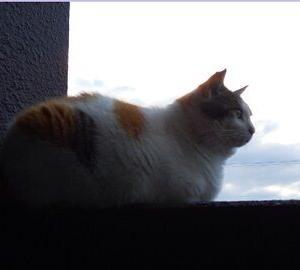 猫に小判を与えたら。 埋蔵金:百弐拾八両  猫の額ほどの縄張り。