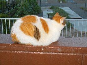 猫に小判を与えたら。  埋蔵金:百参拾両  すとろべりーむぅ~ん。