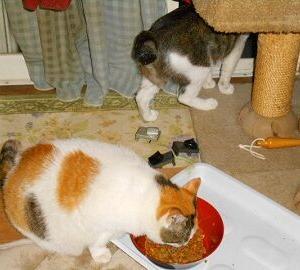 猫に小判を与えたら。 埋蔵金:百参拾参両  威嚇ぅ効ぃ~たんちゃうからぁなぁ。