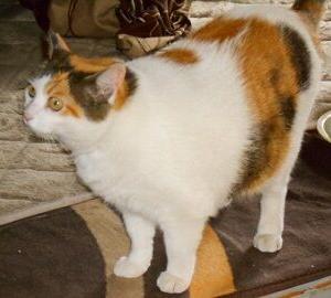猫に小判を与えたら。 埋蔵金:百参拾六両  叩ぁかれればぁわかりますかぁ?