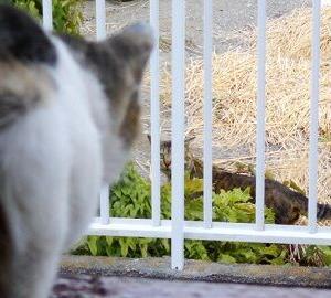 猫に小判を与えたら。 埋蔵金:百参拾七両  行っちゃったなぁっ・・・。
