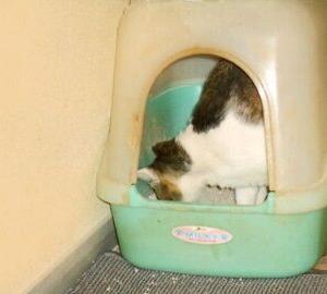 猫に小判を与えたら。  埋蔵金:百四拾両  慌ただぁしぃ~やっちゃぁなぁ~ぁ。