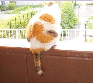 猫に小判を与えたら。 埋蔵金:百四拾弐両  おバカ故ぇにぃ・・・。