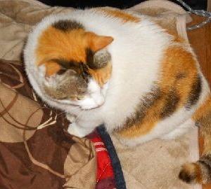 猫に小判を与えたら。 埋蔵金:百四拾参両  土足厳禁でお願いします。