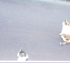 猫に小判を与えたら。 埋蔵金:百四拾伍両  マズぅいやろぉっ・・・。
