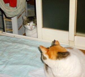 猫に小判を与えたら。 埋蔵金:百四拾七両  声ぇはぁすれぇどもぉ・・・。