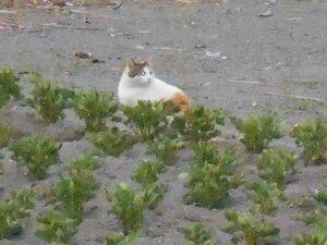 猫に小判を与えたら。 埋蔵金:百四拾八両  毎日が休み。