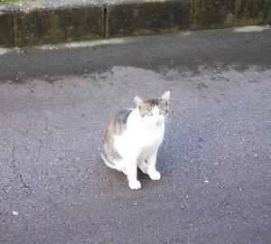 猫に小判を与えたら。 埋蔵金:百伍拾四両  警報音。