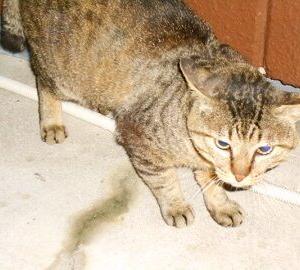 猫に小判を与えたら。 埋蔵金:百伍拾六両  心配は要らぁんなぁっ。