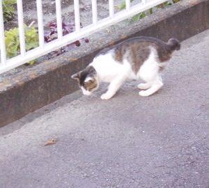 猫に小判を与えたら。 埋蔵金:百伍拾八両  行動ぅ範囲はぁ・・・。