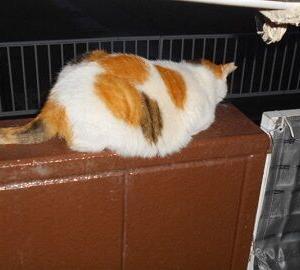 猫に小判を与えたら。  埋蔵金:百六拾両  デンジャラぁ~ゾぉ~ン。