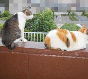 猫に小判を与えたら。 埋蔵金:百六拾弐両  危険なきお散歩。