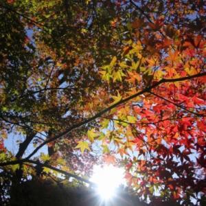 11/15嵯峨野散策 常寂光寺から歩く