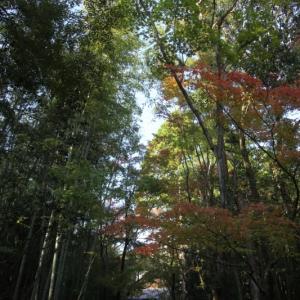 11/16高桐院から紅葉を巡る