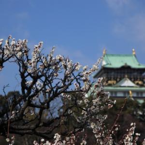 2/10大阪城で梅