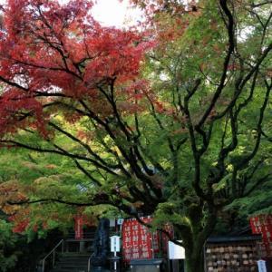 11/3智積院と今熊野観音寺